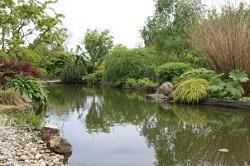 Jardin de valerianes