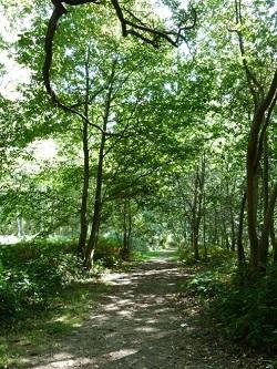 Parcours orientation bois de l epinay